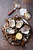 Open oyster Super Speciale with seaweed and ice on wooden background - Stock Image - DDBPK6