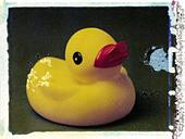 rubber duck, polaroid transfer, ©mak - Stock Image - D0TT8R