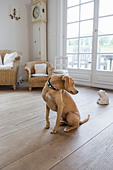 Dog sitting on living room floor - Stock Image - CWW22A
