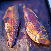 Grilled mackerel - Stock Image - BJMEDG