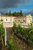 chateau trottevieille saint emilion bordeaux france - Stock Image - BEAW25