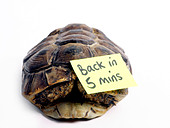 A tortoise with a message that he's out to lunch and will be back in 5 mins. - Stock Image - APB9M9