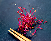 Micro salad Beetroot sprouts - Stock Image - D6G2BH