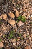soil detail mas du notaire rhone france - Stock Image - C0TDN3
