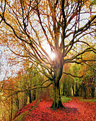 GB - GLOUCESTERSHIRE: Autumn scene at Crickley Hill Country Park - Stock Image - B5NAB8