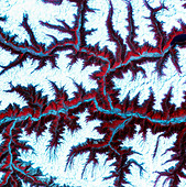 Eastern Himalayas, satellite image. North is at top. Snow is white, vegetation is red, barrenareas are light blue. - Stock Image - B6DRKX
