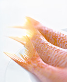 Fish tails - Stock Image - BFDM74