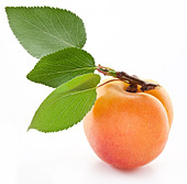 Apricot with leaf on a white background. - Stock Image - C7E6NX
