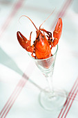 Crayfish in glass - Stock Image - BYGPY4