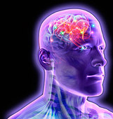 Transparent man's brain glowing and sparkling - Stock Image - C2RY4Y