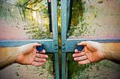 Man tries to open old glasshouse sliding doors - Stock Image - AYR5MK