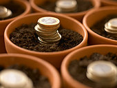 Stacks of Euro coins growing in flowerpots - Stock Image - BK504B