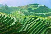 Landscape of rice terraces Longsheng Guangxi China - Stock Image - B5FRF9
