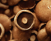 Mushrooms multiple mushroom background eat raw - Stock Image - A0E832