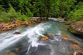 River in Caucasus mountains, near lake Ritsa, Abkhazia, Georgia - Stock Image - EFN9HP