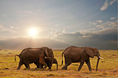 elephant family in amboseli national park, kenya - Stock Image - CFKKJB