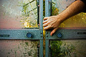 Man tries to open old glasshouse sliding doors - Stock Image - AYR6EP