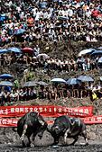 Jianhe, China's Guizhou Province. 20th July, 2015. Two bulls fight fiercely against each other in a bullring in Jianhe County, southwest China's Guizhou Province, July 20, 2015. A Bull King Competition held in the county attracted many audience from the neighboring villages. This competition was part of the Guizhou Jianhe Yangasha Culture Festival in 2015, which was held to commemorate Yangasha, a beautiful lady symbolizing love and life in the legend of Miao ethnic group. © Liu Xu/Xinhua/Alamy Live News - Stock Image - EY28K2