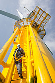 An engineer climbs a transition piece of a wind turbine on the Walney offshore wind farm - Stock Image - C6EJC2