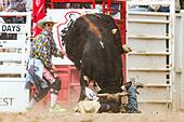Cheyenne, Wyoming, USA. 26th July, 2015. Bull rider Lon Danley is gored by a bull during the Bull Riding finals at the Cheyenne Frontier Days rodeo in Frontier Park Arena July 26, 2015 in Cheyenne, Wyoming. Danley was uninjured and walked off the arena. - Stock Image - EYC670