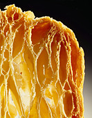 Close up of cooked flaky pastry - Stock Image - C8B7TT