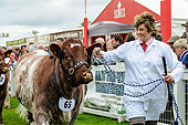 Edinburgh, UK. June 18, 2015. In the show ring. The Royal Highland Show, one of ScotlandÕs most iconic and enduring annual events, is holding its 175th Show at the Royal Highland Centre, Ingliston, Edinburgh. © Roger Gaisford/Alamy Live News. - Stock Image - EW5B07