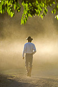 Cowboy Walking through Dust in Morning, New Mexico, USA - Stock Image - B684BA