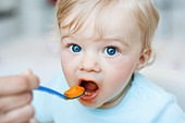 baby being fed looking at viewer - Stock Image - BH861W