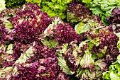 Fresh lettuce on a market stall. Bremen, Germany - Stock Image - E744M1