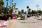 Horse and carriage rides, Finikoudas, Larnaca, Cyprus - Stock Image - EANBGR