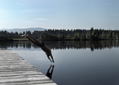 Man diving into still lake - Stock Image - CT143D