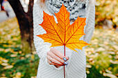 Autumn leaves in girl hands - Stock Image - FD26R7