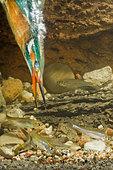 Kingfisher / Alcedo atthis - Stock Image - CTJXB1