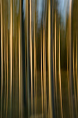 Abstract forest. - Stock Image - BDR7AN