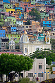 colorful houses in the city, Cerro del Carmen, Ecuador, Guayaquil - Stock Image - DADRN6