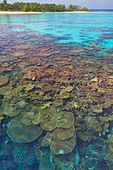 Coral plates, lagoon and tropical island, Maldives, Indian Ocean, Asia - Stock Image - CPDHC0