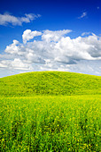 Summer landscape - saturated view of meadow. Europe, Poland. Adobe RGB (1998). - Stock Image - B3RAE9