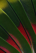 PARROT FEATHERS - Stock Image - B8CB06