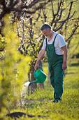 Senior man watering his garden/orchard - Stock Image - CB5RYM