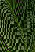 PARROT FEATHERS - Stock Image - B8C94M
