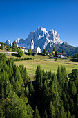 Italy Alps Veneto Dolomites Cadore hill wood forest meadows Pelmo holidays travel, - Stock Image - BNM929