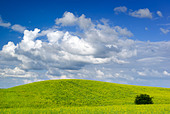 Summer landscape - saturated view of meadow. Europe, Poland. Adobe RGB (1998). - Stock Image - B3TH9D