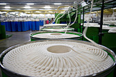 India Indore , spinning mill produce yarn from organic and fair trade cotton - Stock Image - B70E07