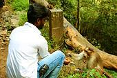 Young man feeding a monkey - Stock Image - KDDG4Y