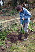 Model released teenage boy digging hole in garden - Stock Image - BK7G4B