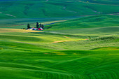 High angle view of green fields, Steptoe Butte, Palouse, Washington State, USA - Stock Image - C55W1X