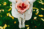 Autumn leaves in girl hands - Stock Image - FD26R9