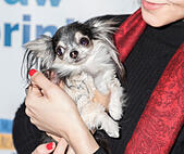 New York, NY, USA - December 19: Corazon at the Paw Prints 1st Annual Paw-liday party screening of 'Best in Show' at IFC center Credit: Sam Aronov/Alamy Live News - Stock Image - KRFMYC