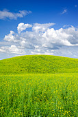 Summer landscape - saturated view of meadow. Europe, Poland. Adobe RGB (1998). - Stock Image - B3RB07