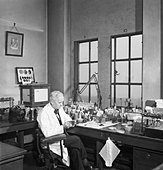 Professor Alexander Fleming at work in his laboratory at St Mary's Hospital, London, during the Second World War. D17801 - Stock Image - D95225